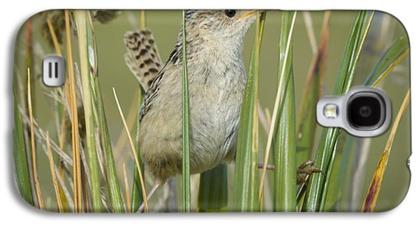 Grass Wren Galaxy S4 Case