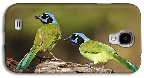 Green Jays (cyanocoras Yncas Galaxy S4 Case by Larry Ditto