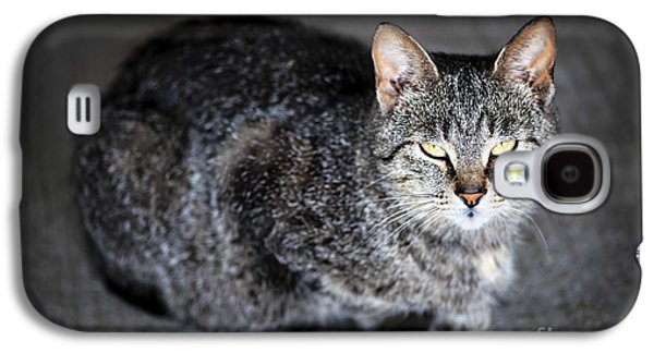 Grey Cat Portrait Galaxy S4 Case