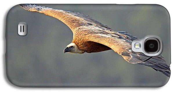 Griffon Vulture In Flight Galaxy S4 Case by Bildagentur-online/mcphoto-schaef