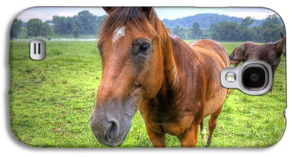 Horses In A Field Galaxy S4 Case