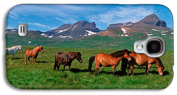 Horses Standing And Grazing In A Galaxy S4 Case by Panoramic Images