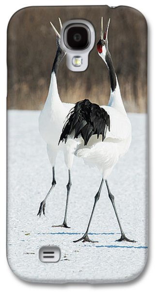 Japanese Cranes Displaying Galaxy S4 Case by Dr P. Marazzi