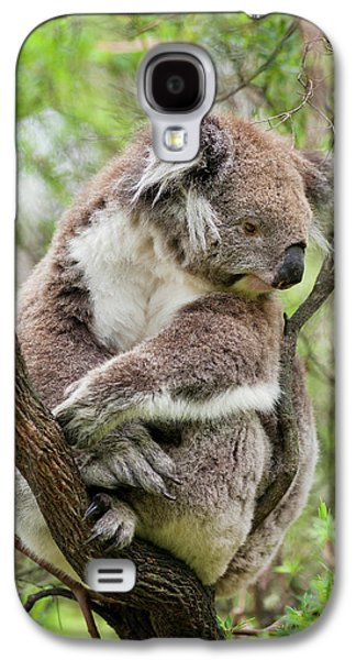 Koala (phascolarctos Cinereus Galaxy S4 Case by Martin Zwick