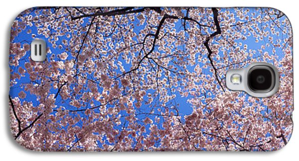 Low Angle View Of Cherry Blossom Trees Galaxy S4 Case by Panoramic Images
