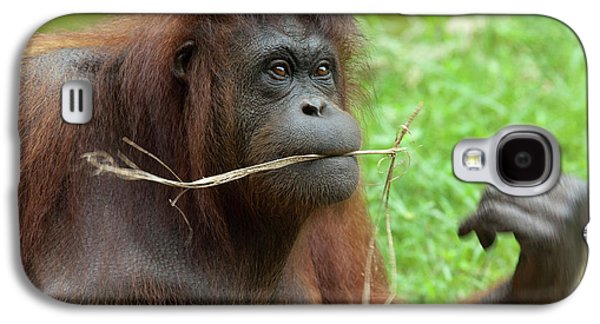 Malaysia, Borneo, Sabah, Kota Kinabalu Galaxy S4 Case by Cindy Miller Hopkins