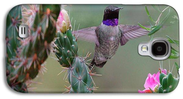 Male Black-chinned Hummingbird Galaxy S4 Case