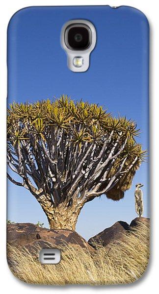 Meerkat In Quiver Tree Grassland Galaxy S4 Case
