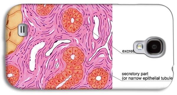 Merocrine Sweat Glands Galaxy S4 Case