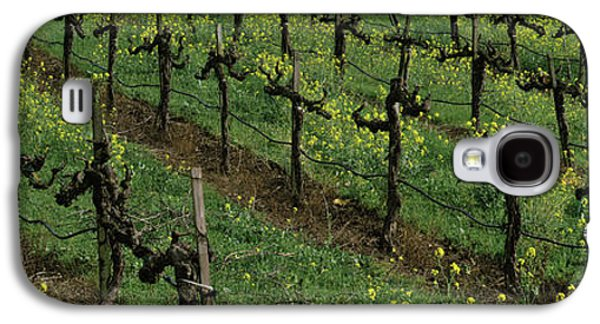 Mustard And Vine Crop In The Vineyard Galaxy S4 Case by Panoramic Images