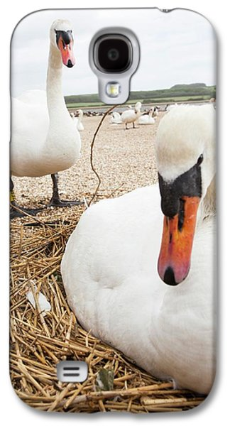 Mute Swan Galaxy S4 Case by Ashley Cooper