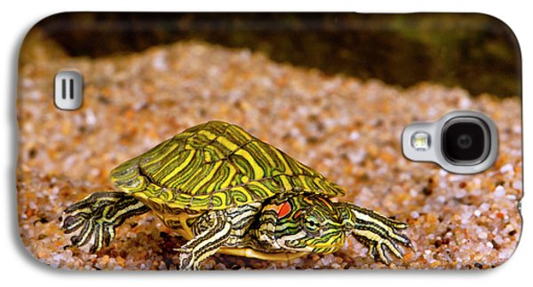Ornate Red Ear Turtle, Chrysemys Galaxy S4 Case