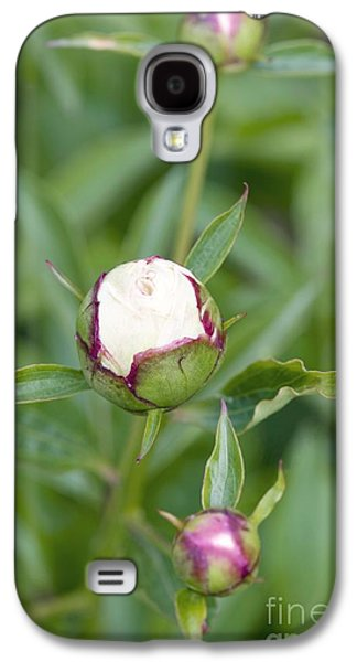 Paeonia Lactiflora Shirley Temple Galaxy S4 Case by Jon Stokes