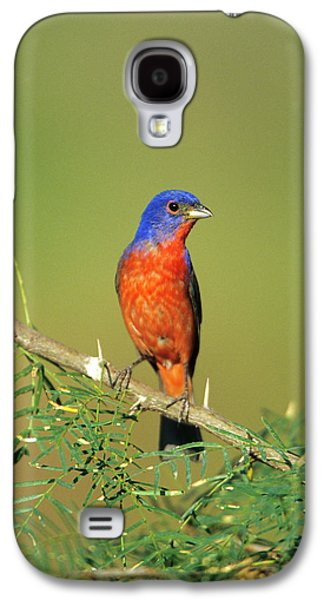 Bunting Galaxy S4 Case - Painted Bunting (passerina Ciris by Richard and Susan Day