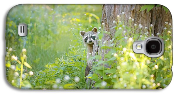 Raccoon Galaxy S4 Case - Peek A Boo by Carrie Ann Grippo-Pike