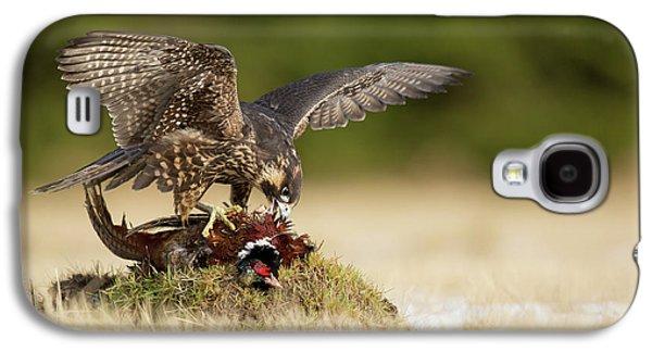 Pheasant Galaxy S4 Case - Peregrine Falcon by Milan Zygmunt
