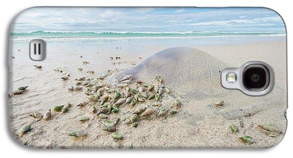 Ploughshare Snails Feeding On Jellyfish Galaxy S4 Case