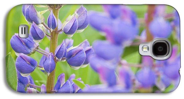 Purple Lupine Flowers Galaxy S4 Case by Keith Webber Jr