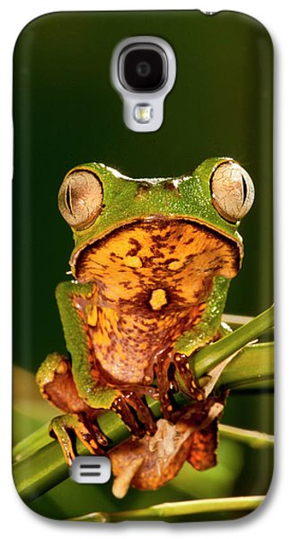 Razor Backed Monkey Frog Phyllomedusa Galaxy S4 Case