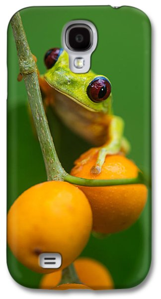Red-eyed Tree Frog Agalychnis Galaxy S4 Case by Panoramic Images