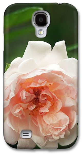 Rosa 'auguste Gervai' Flower Galaxy S4 Case by Maria Mosolova