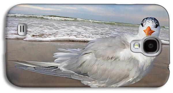 Royal Tern Galaxy S4 Case by Betsy Knapp