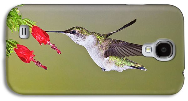Ruby-throated Hummingbird (archilochus Galaxy S4 Case by Larry Ditto