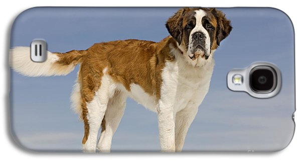 Saint Bernard Galaxy S4 Case by Jean-Michel Labat