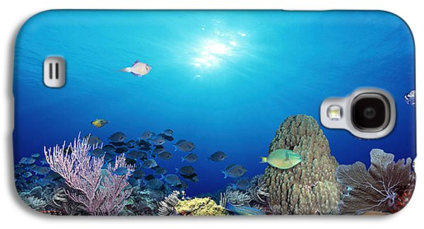 School Of Fish Swimming In The Sea Galaxy S4 Case by Panoramic Images