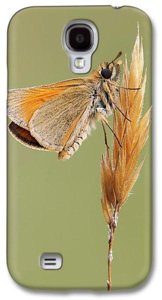 Small Skipper Butterfly Galaxy S4 Case by Heath Mcdonald