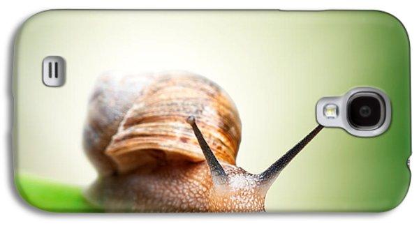Snail On Green Stem Galaxy S4 Case by Johan Swanepoel