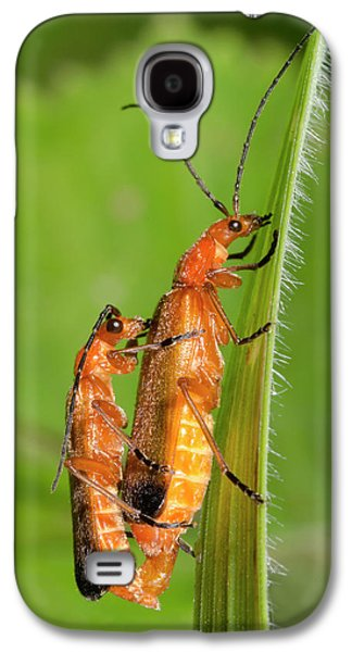 Soldier Beetles Mating Galaxy S4 Case by Nigel Downer