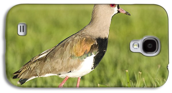 Lapwing Galaxy S4 Case - Southern Lapwing by William H. Mullins