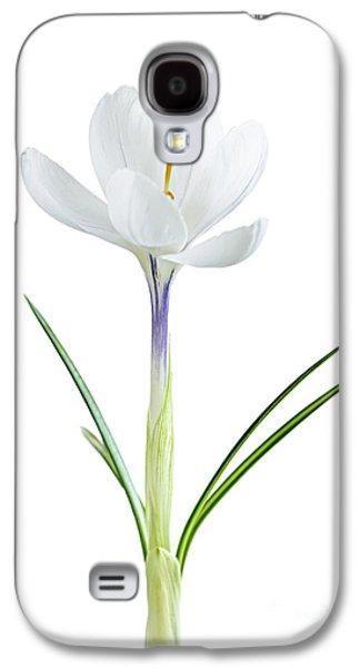 Spring Crocus Flower Galaxy S4 Case by Elena Elisseeva