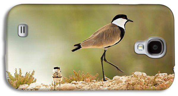 Spur-winged Lapwing Vanellus Spinosus Galaxy S4 Case