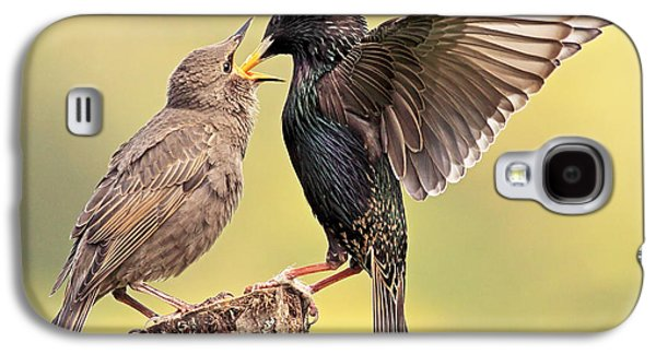 Starlings Galaxy S4 Case by Grant Glendinning