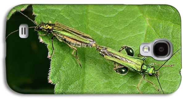 Swollen-thighed Beetles Galaxy S4 Case by Nigel Downer