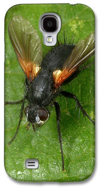 Tachinid Fly Galaxy S4 Case