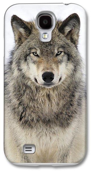 Timber Wolf Portrait Galaxy S4 Case