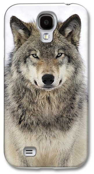 Timber Wolf Portrait Galaxy S4 Case