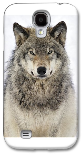 Timber Wolf Portrait Galaxy S4 Case by Tony Beck