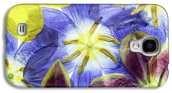 Tulip Galaxy S4 Case - Tulips by Mandy Disher