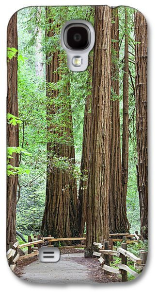 Usa, California Trail Through Muir Galaxy S4 Case by Jaynes Gallery