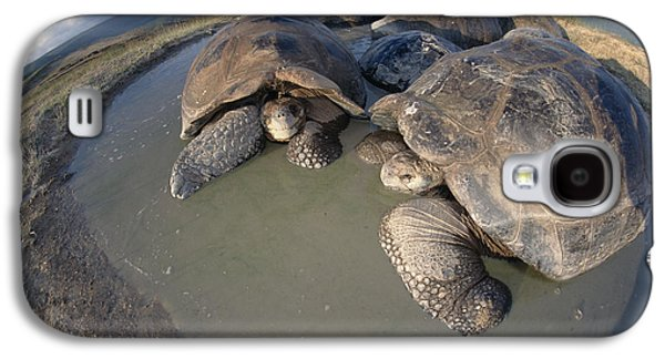 Volcan Alcedo Giant Tortoises Wallowing Galaxy S4 Case