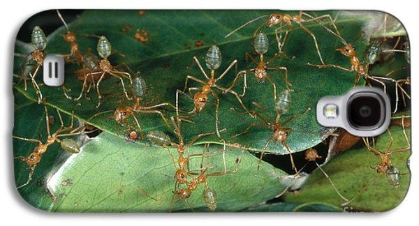 Weaver Ants Galaxy S4 Case by Gregory G. Dimijian, M.D.