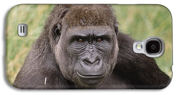 Western Lowland Gorilla Young Male Galaxy S4 Case