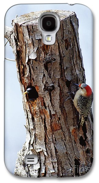 Woodpecker And Starling Fight For Nest Galaxy S4 Case by Gregory G. Dimijian