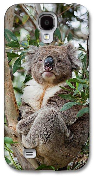 Koala (phascolarctos Cinereus Galaxy S4 Case