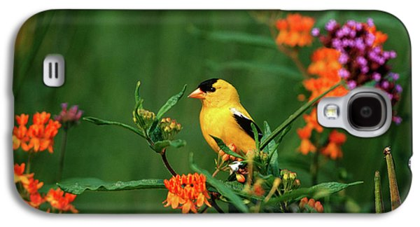 Canary Galaxy S4 Case - American Goldfinch (carduelis Tristis by Richard and Susan Day