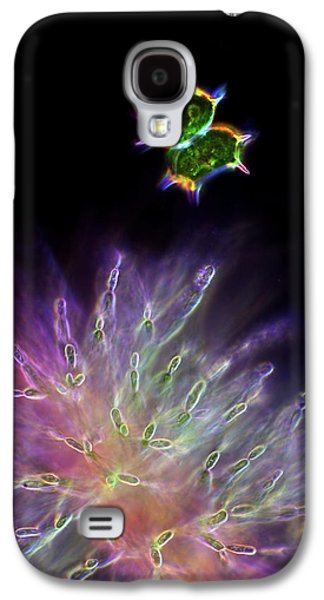 Desmid And Red Algae Galaxy S4 Case